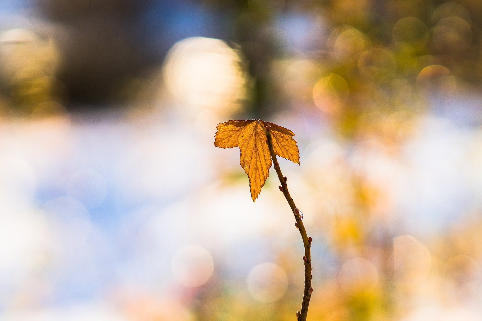 leaf-Detachement