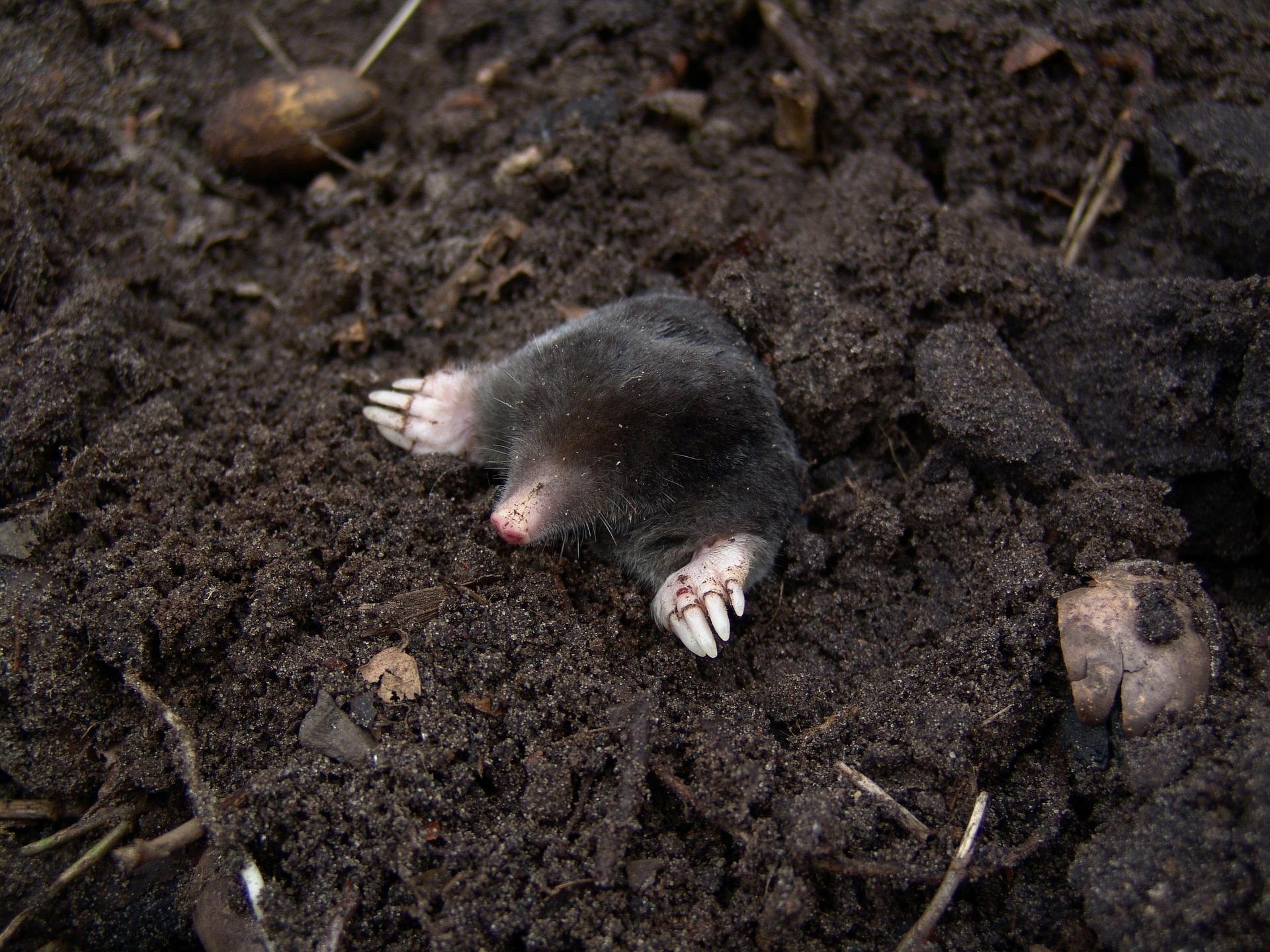 mole-molehills